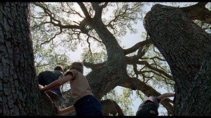 treeoflifeclimb